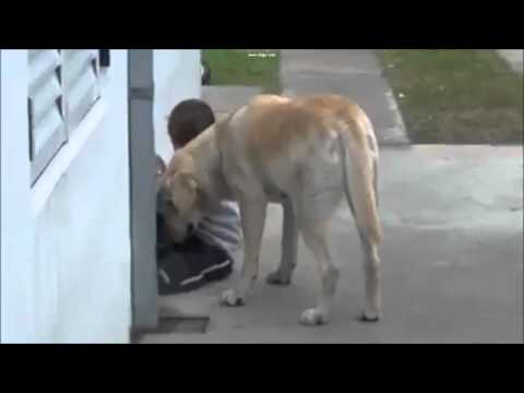 Down Syndrome Boy & Loving Dog – Extremely Touching