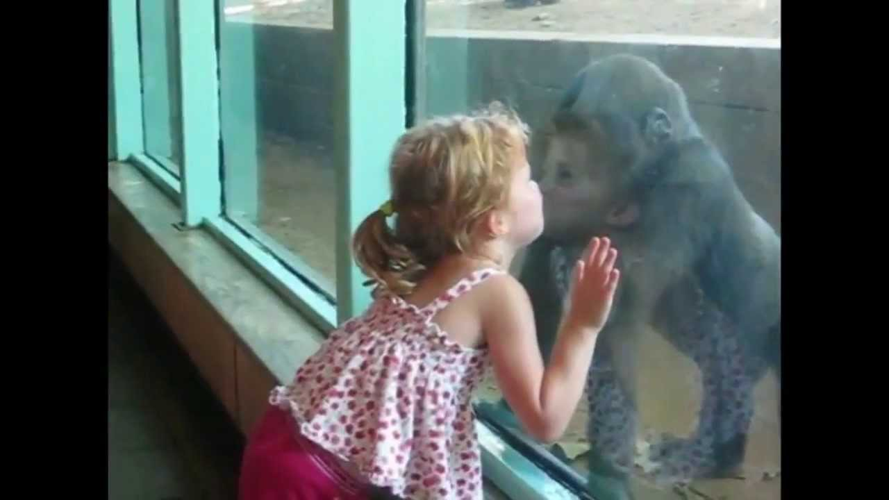 Little Girl & Baby Gorilla Become Friends