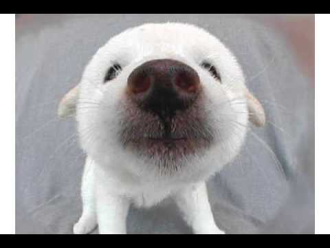 Valentine Pooch  ……………….. Gotta' Love this Puppy