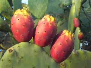 Italian Prickle Pears