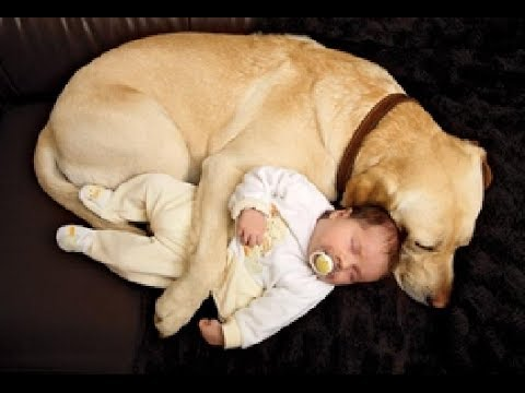 Cats and Dogs Protecting Babies