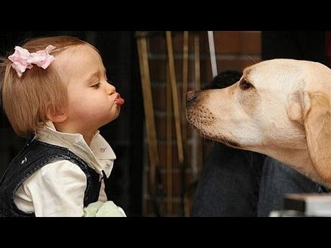 Dogs and Babies Talking
